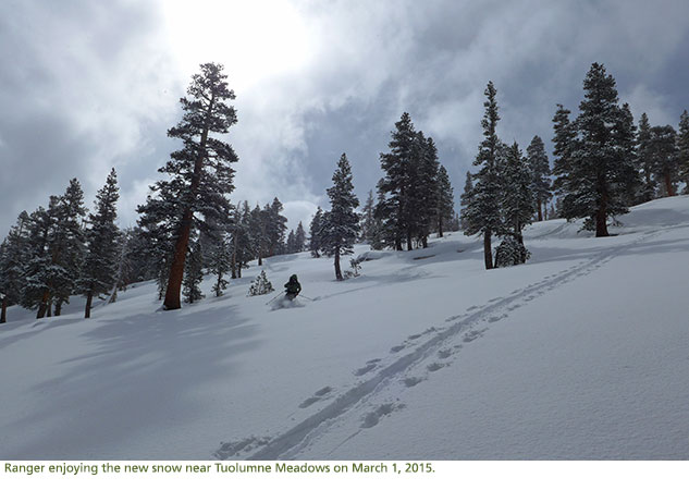 Ranger skiing the new snow near Tuolumne Meadows on a cloudy day.