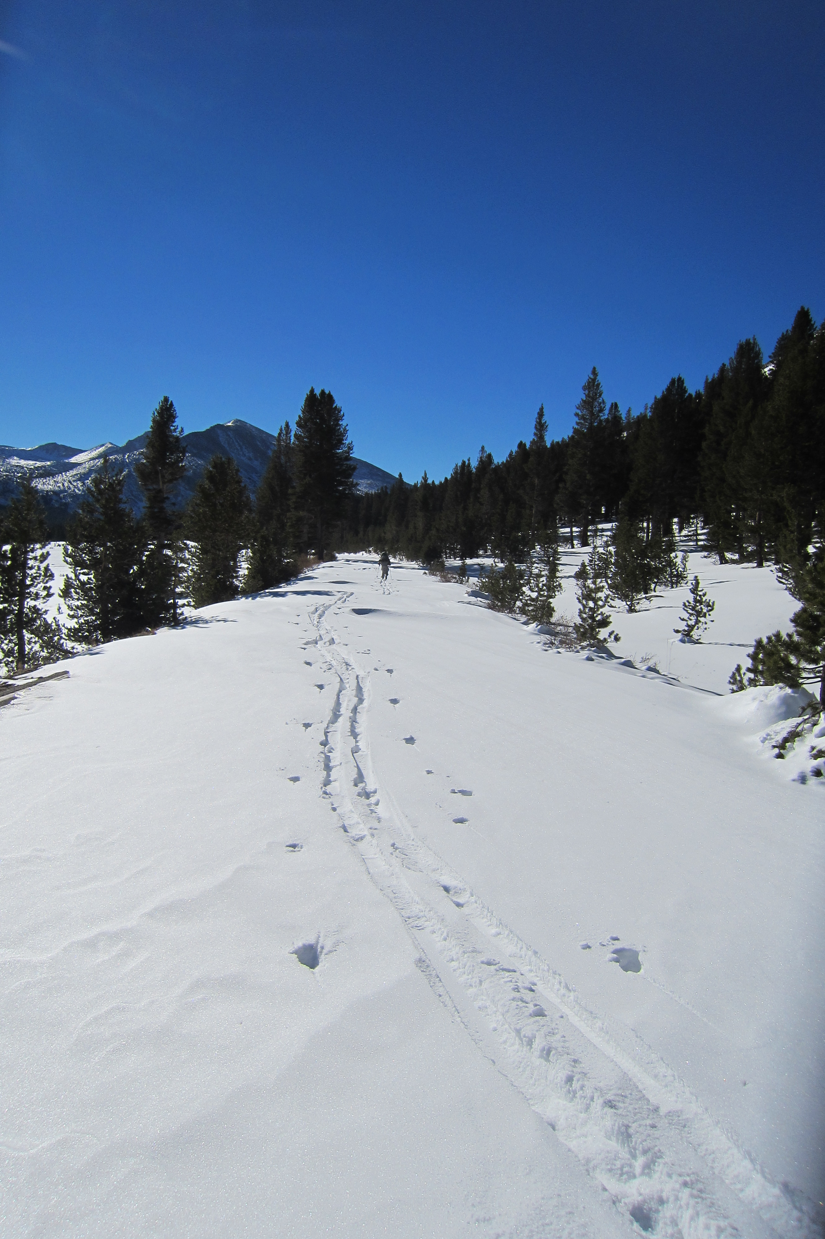 Skiing on the Tioga Road near Dana Meadows, December 14, 2013