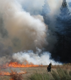 Fire crews ignite Leidig meadow during a Yosemite Valley prescribed burn