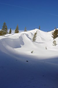 Snow in Jack Main Canyon, taken during the February snow survey.