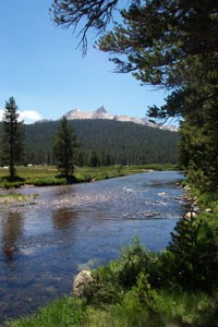 Fifty-four miles of the Tuolumne Wild & Scenic River flow through Yosemite National Park.