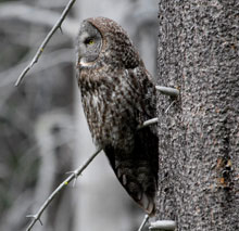 Side profile of an owl hanging on tree