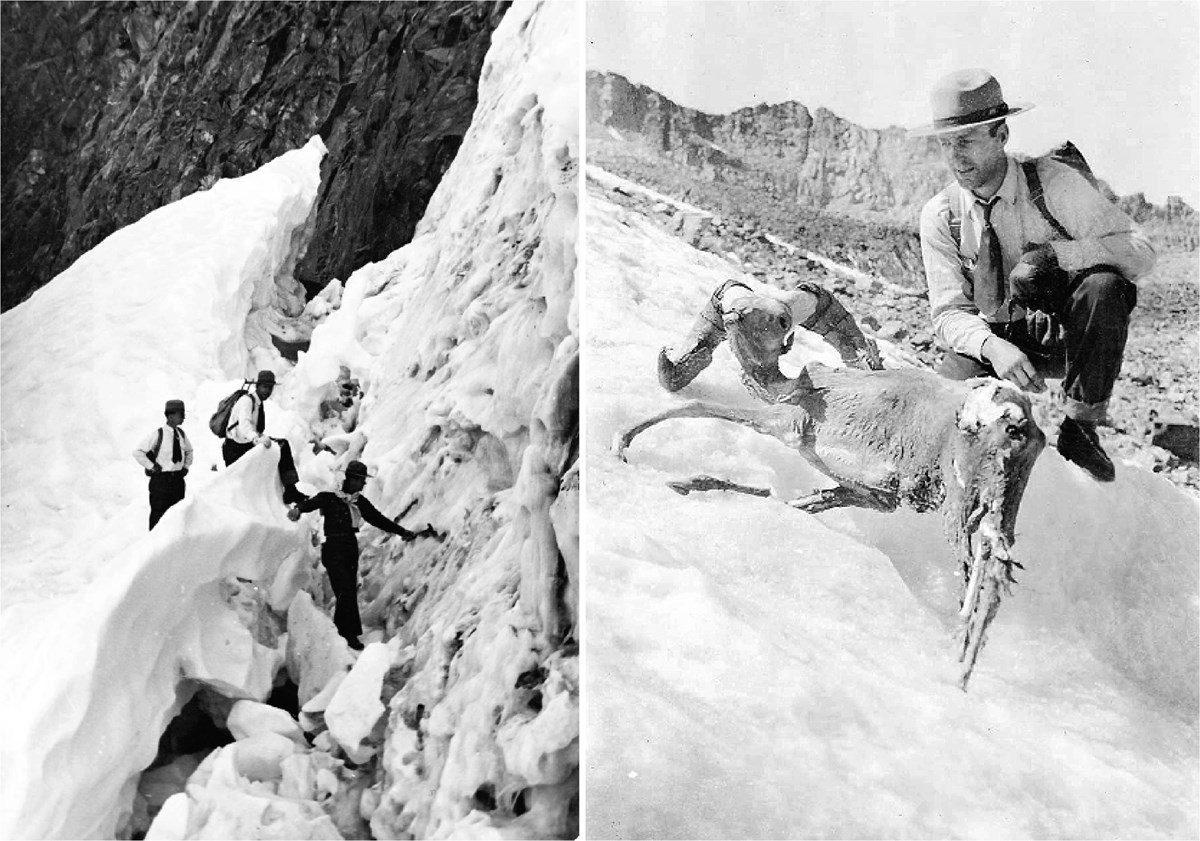 Historic photos show a group of people exploring a glacier crevasse, and a ranger kneeling next to a frozen mummified bighorn sheep melting out of a glacier.