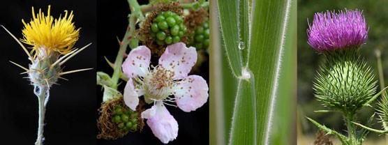 Four images of invasive plants