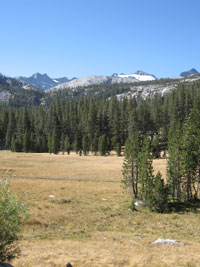 Conifers grow in meadow with mountains behind