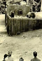 Three bears eat from a dump while visitors look on
