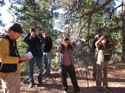 People using binoculars to scan trees in search of birds.