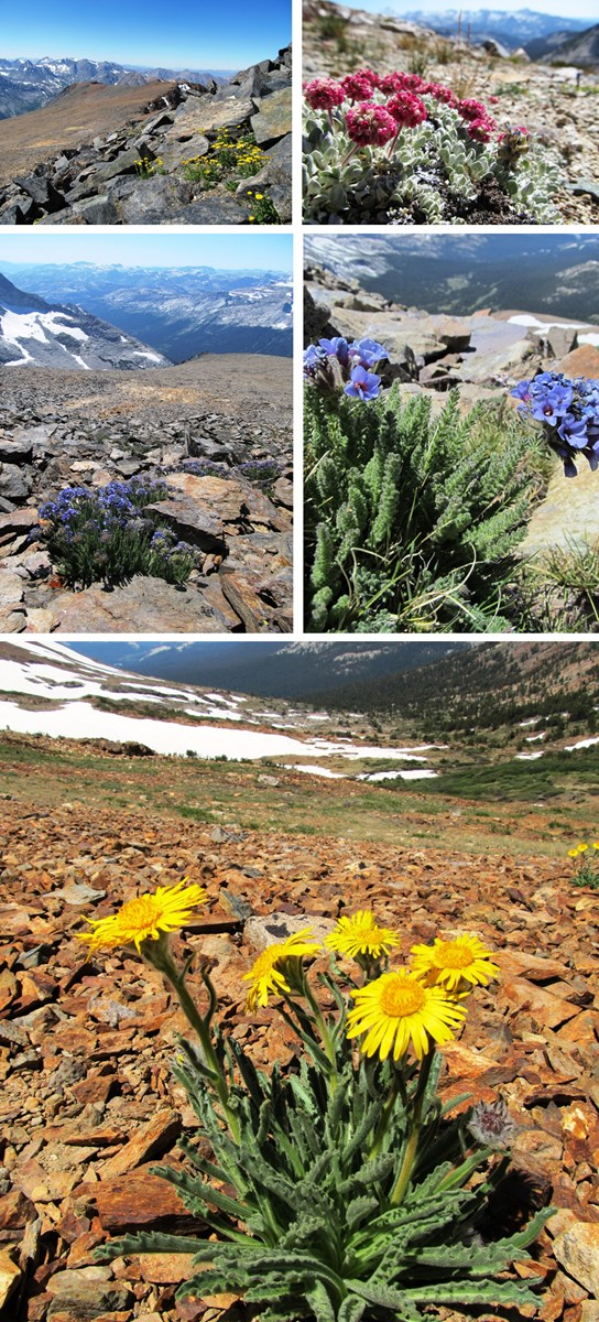 Images of high country vegetation and flowers