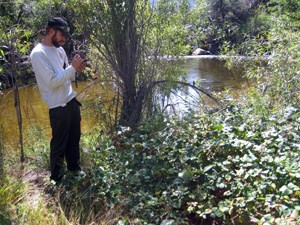 Employee using GPS unit to map known invasive plant populations so they can be tracked over time.