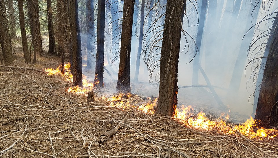 Fire Ecology and Monitoring - Yosemite National Park (U S