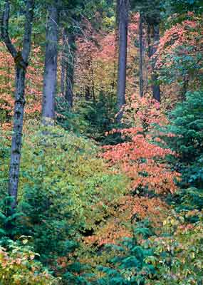 Mixed forest colors