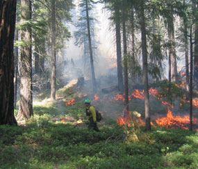 Firefighter walks through a lush forest with flames