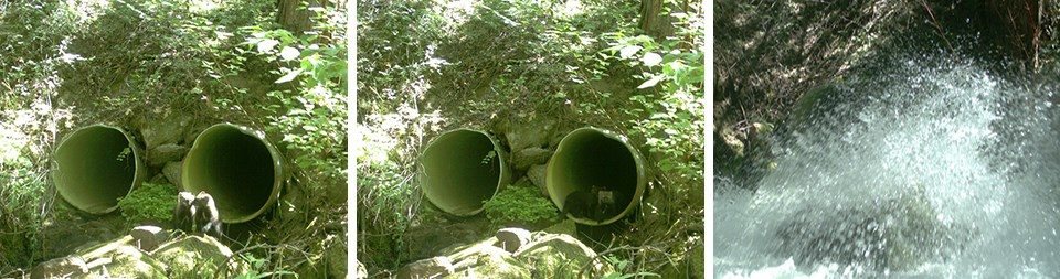 Fishers in culvert when dry and photo of culvert full of water during high runoff