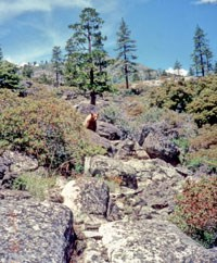 Trees and shrubs in a dry, rocky habitat