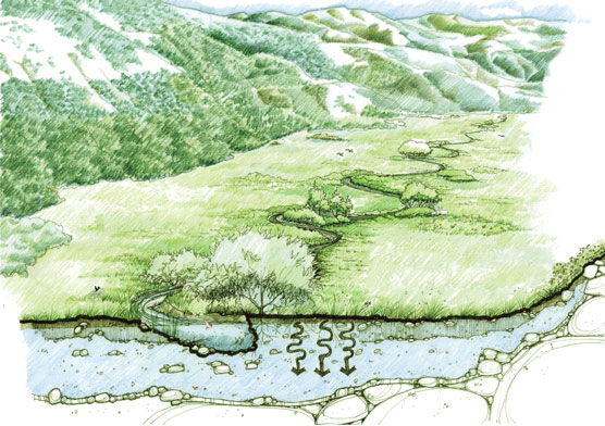 graphic of a pristine meadow landscape