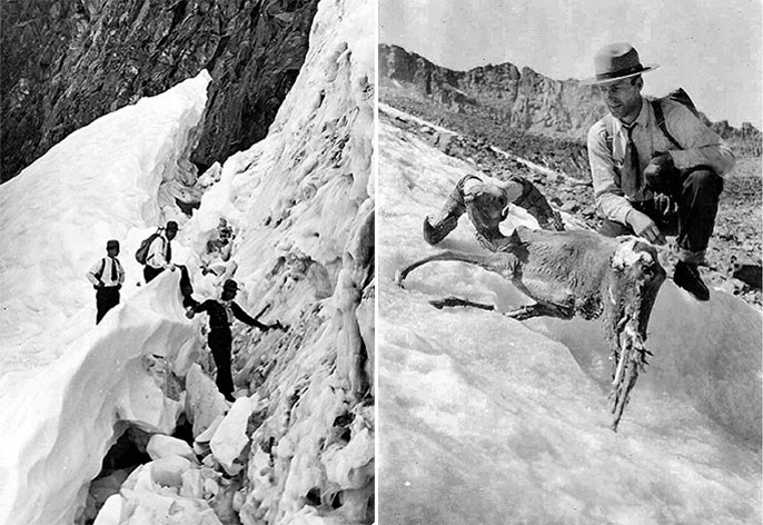 Historic photos showing researchers on a glacier and kneeling next to a mummified bighorn sheep.