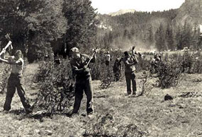 Men stand in field with axes in air to remove young trees