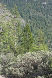 Leafy trees, conifers and shrubs fill a forest hillside