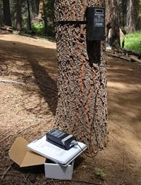 infrared trail counter affixed to tree