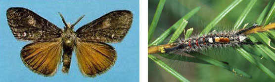 Moth on left and caterpillar on right