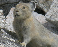 Mammal Species List Yosemite National Park U S