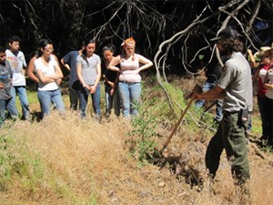 Yosemite park rangers lead and educate volunteers about invasive plant management.