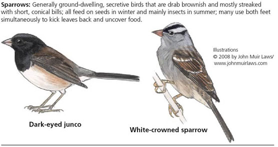 Dark-eyed junco on left and white-crowned sparrow on right