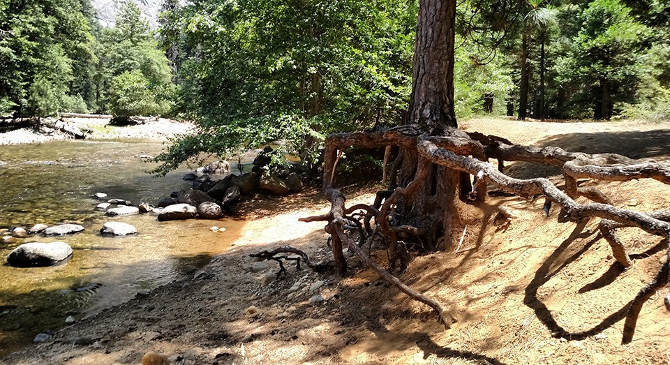 Riverbank erosion in the Upper Pines campground.