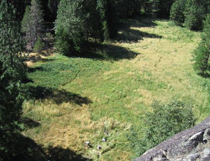 Green meadow filled with brown patches of invasive velvet grass
