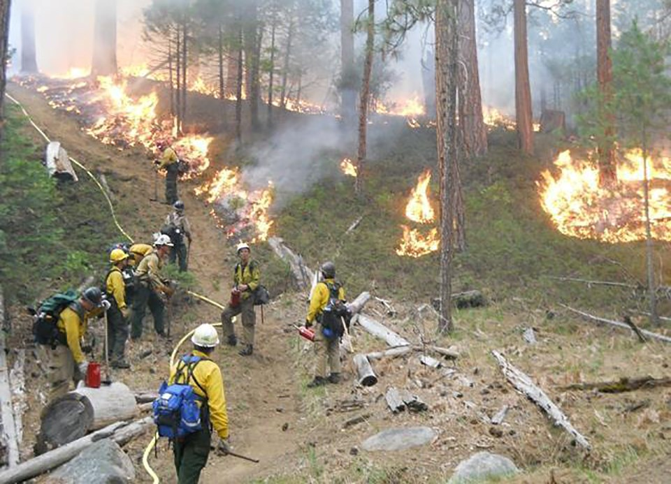 Wildland firefighters monitoring a prescribed fire in Wawona in 2017