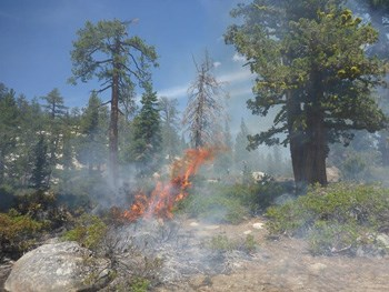Large mature overstory trees are resilient to fire and remain unaffected by this small lightning ignited fire.