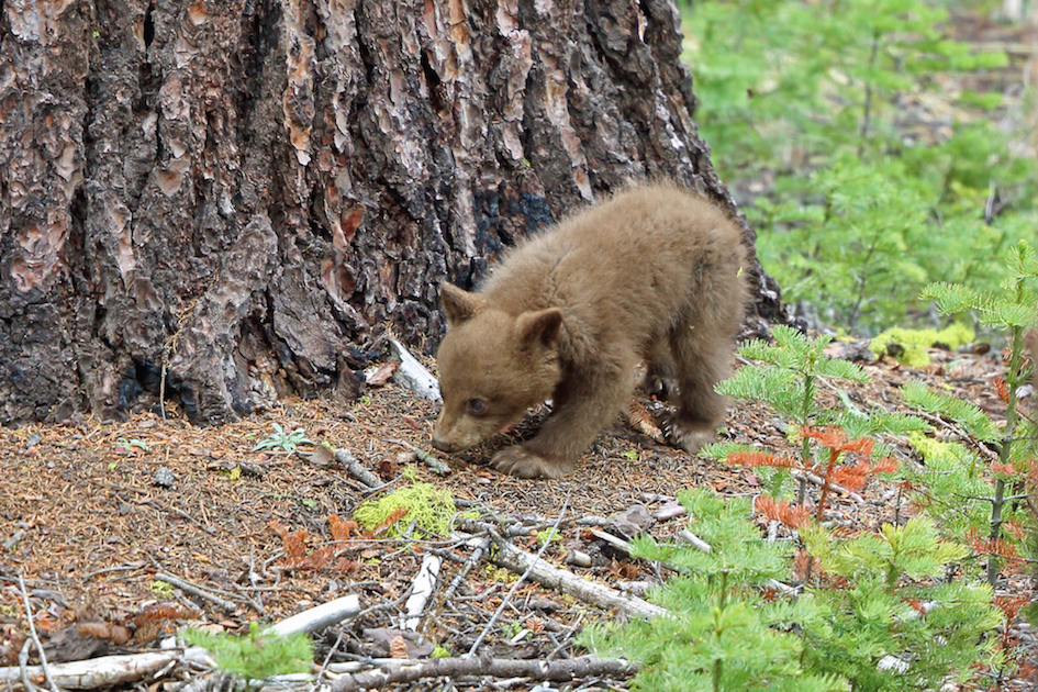 Yosemite National Park And Yosemite Conservancy Launch New