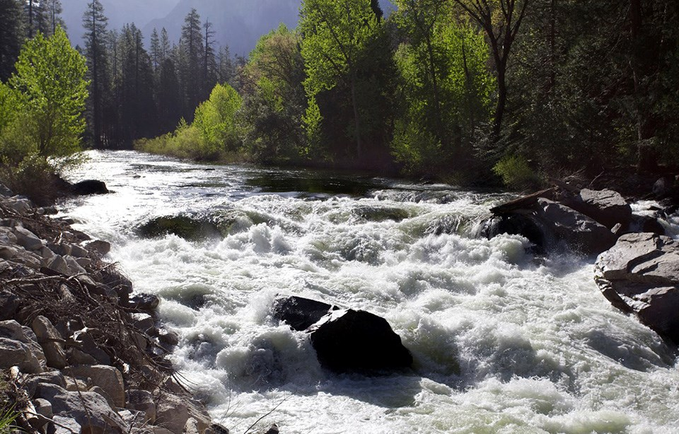 View of rushing full Merced River in early May 2013.