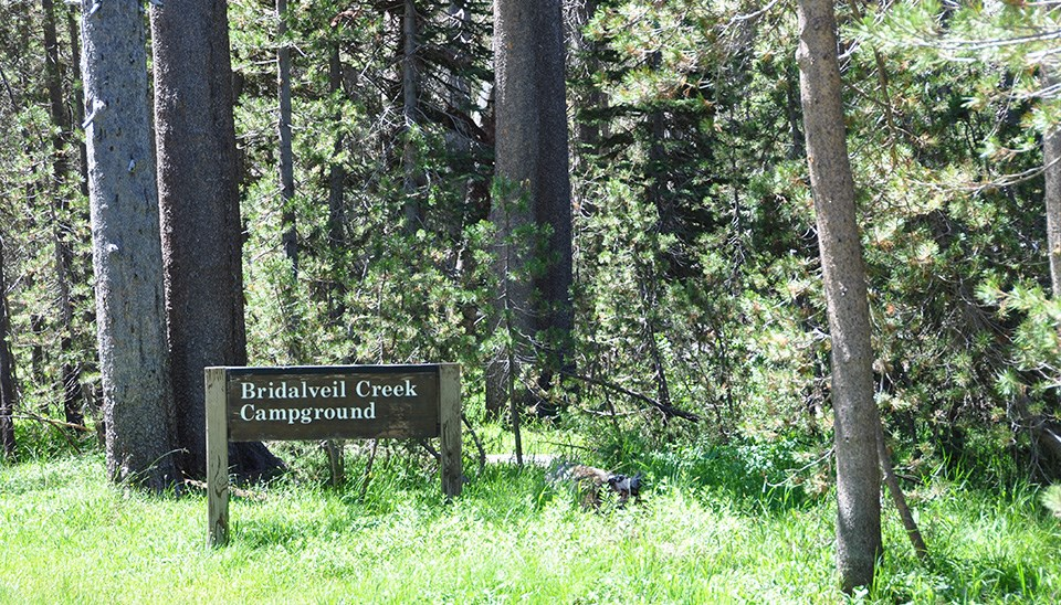 Bridalveil Creek Campground sign along road