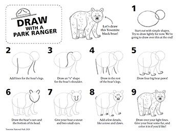 Black bear drawing step-by-step with images