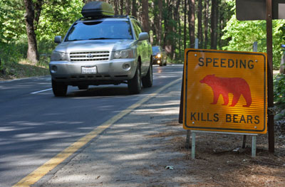 "Signs that say ""Speeding Kills Bears"" mark places along the road that bears have been hit by vehicles."