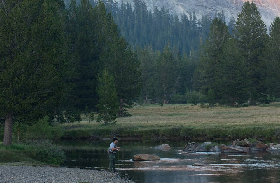 Person fishing in Tuolumne River in Tuolumne Meadows at dusk
