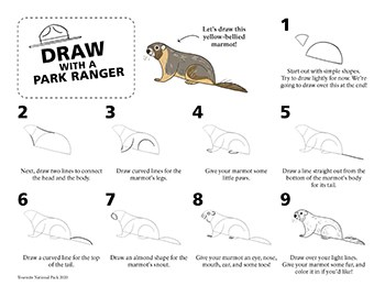 Step-by-step directions on how to draw a simple line drawing of a marmot.