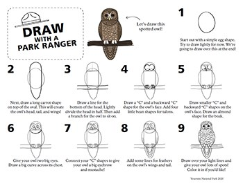 Step-by-step directions on how to draw a simple line drawing of a spotted owl.