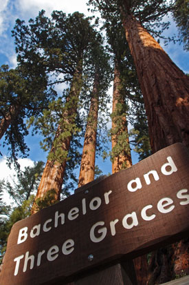 Bachelor and Three Graces sign in front of the Bachelor and Three Graces sequoias