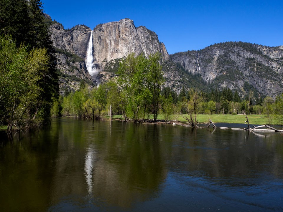 Yosemite Falls in background with nearly flooding Merced River in foreground