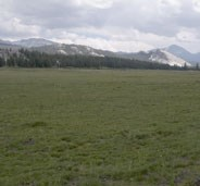 Lembert Dome and peaks rise above greening Tuolumne Meadows