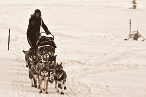A musher & team on the Yukon River