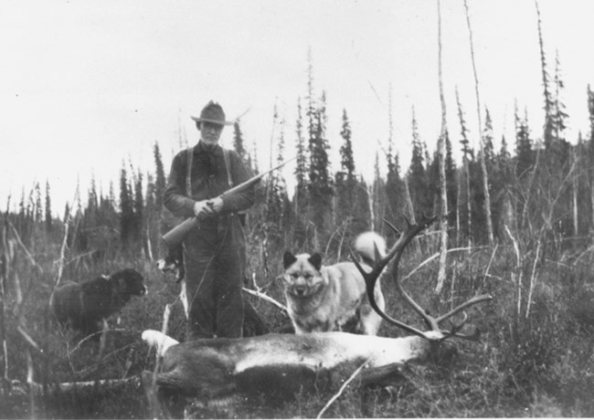 Cap Reynolds stands with two of his dogs over a harvested bull caribou.