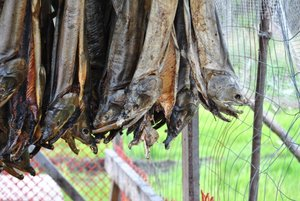 Salmon drying at a Yukon River homestead in 2012.