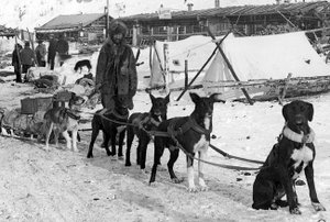 Historic photo of Downing and his dog team in the gold rush town of Bennett in the Yukon in 1898.