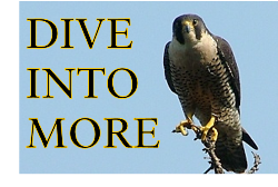 Go to page two to learn about the recover of the peregrine falcon