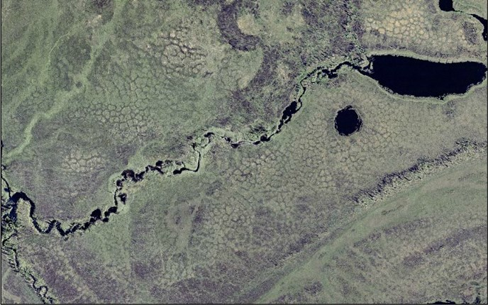 An aerial view of permafrost polygons about fifty-feet wide in a low-lying area near the Yukon River.