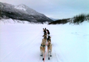 Mushing on the Yukon River