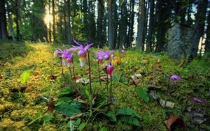 Orchids in the forest in summer
